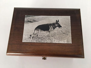 engraved image of Germans Shepherd on silver plaque atop music box